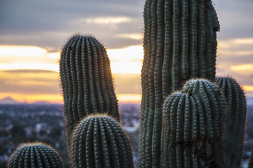 arizona-desert-1443336_960_720